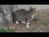 1 - Котята с ул.П.Корч. (6 мес.), 21 фев.2014